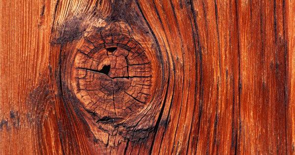 Ценные породы дерева - богатство России