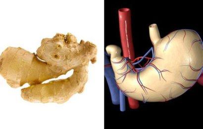 Фрукты и овощи похожие на органы