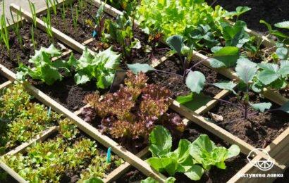 Огород на балконе: что можно выращивать дома