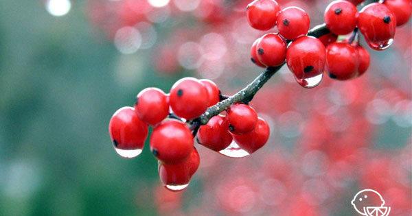 Сок калины: лечебные свойства, состав и применение. Лечение соком калины: показания и противопоказания