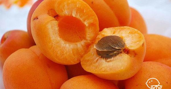 Абрикос - полезные свойства и вред