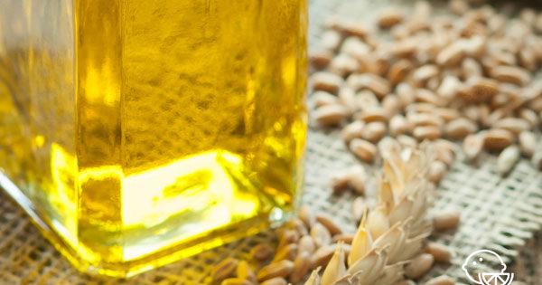 Масло зародышей пшеницы в капсулах: свойства и применение