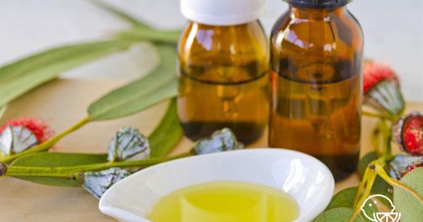 Эфирное масло эвкалипта — лечебные свойства и применение