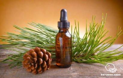 Польза и вред эфирного масла ели