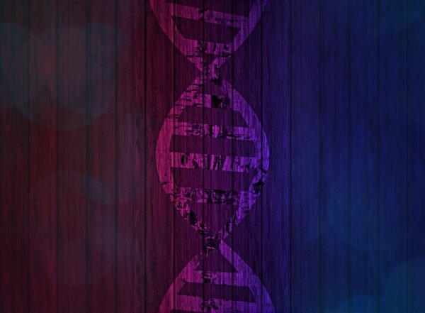 Незаменимые аминокислоты для организма