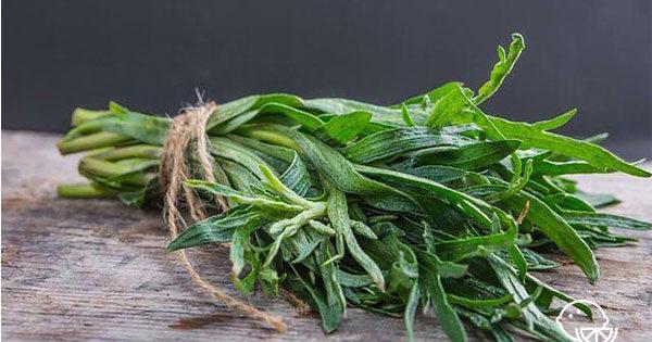 Польза и вред травы тархун для здоровья. Как сделать лимонад тархун в домашних условиях