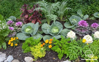 Смешанные посадки овощей на грядках