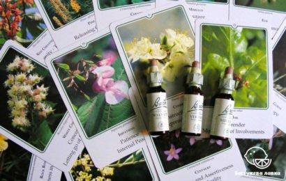 Цветочная терапия Баха − направление в гомеопатии