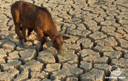 Последствия животноводства