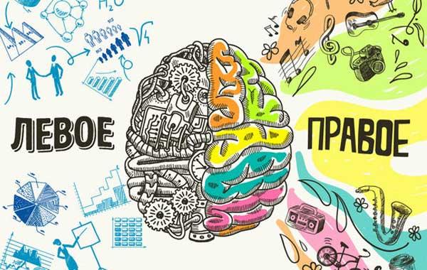 Синхронизация полушарий головного мозга. Как развить полушария мозга