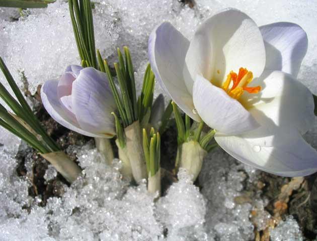 Весна - время перемен и обновлений для женщины: 7 шагов для перезагрузки