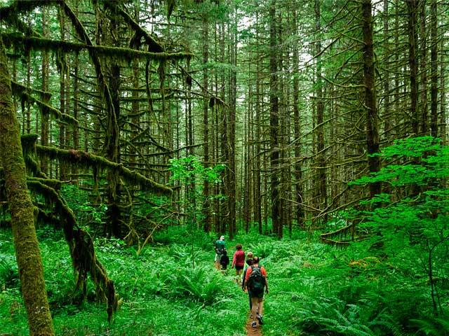 Экотуризм в лесу