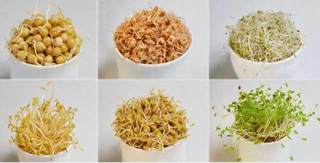 Польза пророщенных семян для организма. Замачивание и проращивание