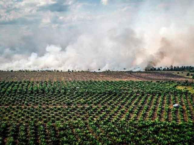 Сжигание пальмовых лесов