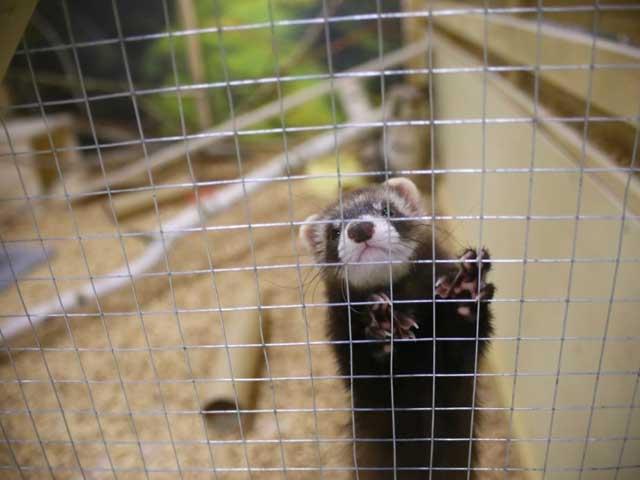 Жестокое обращение с животными в контактных зоопарках