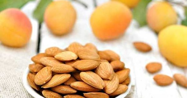 Польза абрикосовых косточек для организма
