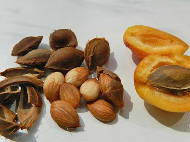 Лечебные свойства абрикосовых косточек, против онкологии, гельминтов, для набора веса и при болезнях сердца.