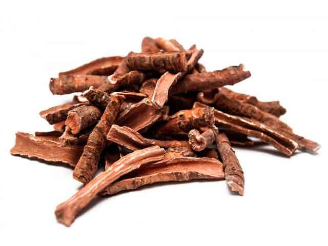 Лечебные свойства корня бадана для здоровья