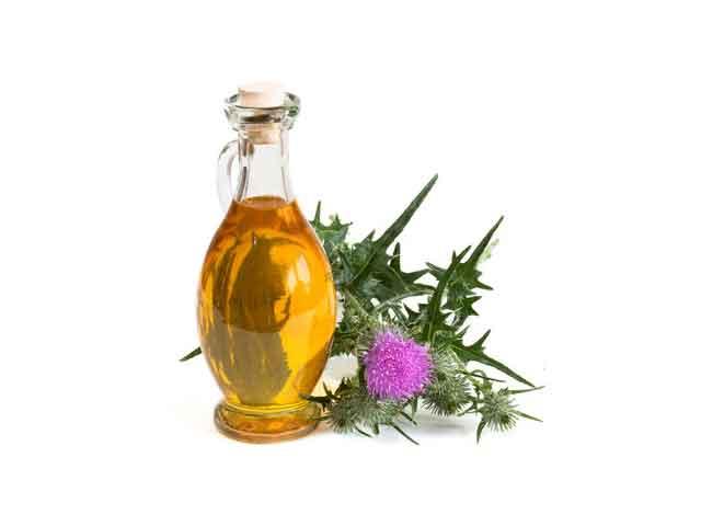 Полезные свойства масла расторопши для организма. Применение
