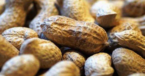 Польза и вред арахиса для организма человека