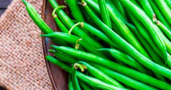 Стручковая фасоль – польза и вред для здоровья