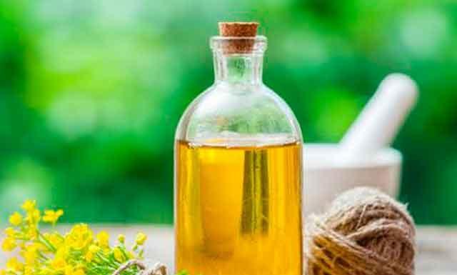 Рыжиковое масло: польза и вред для организма. Как принимать