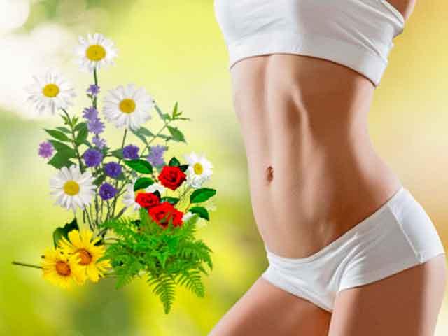 Травы для похудения: сжигающие жир, мочегонные, очищающие организм