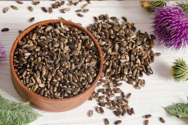 Лечебные свойства семян расторопши