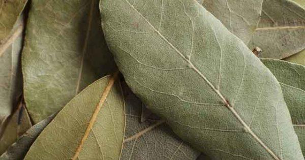 Лавровый лист - древнеее лекарственное растение