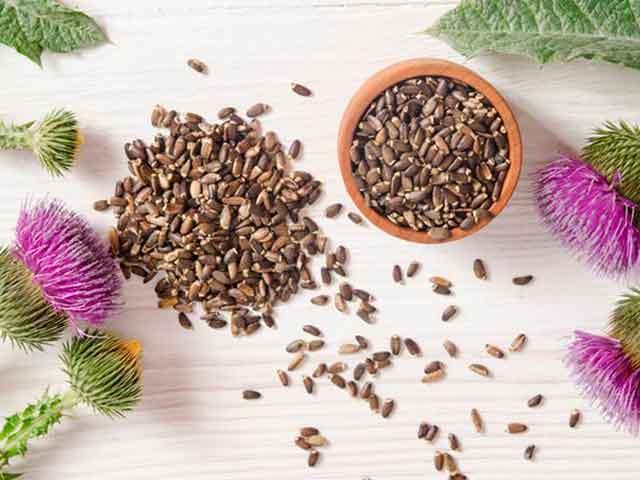 Польза и вред семян расторопши. Как принимать для похудения и лечения печени