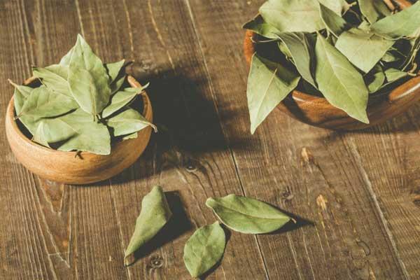 Польза отвара из лавровых листьев для организма человека