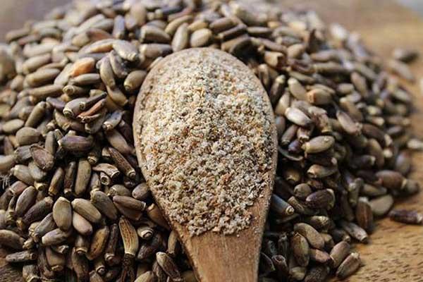 Польза семян расторопши для организма