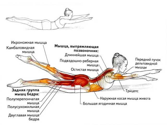 Упражнение лодочка: какие мышцы работают