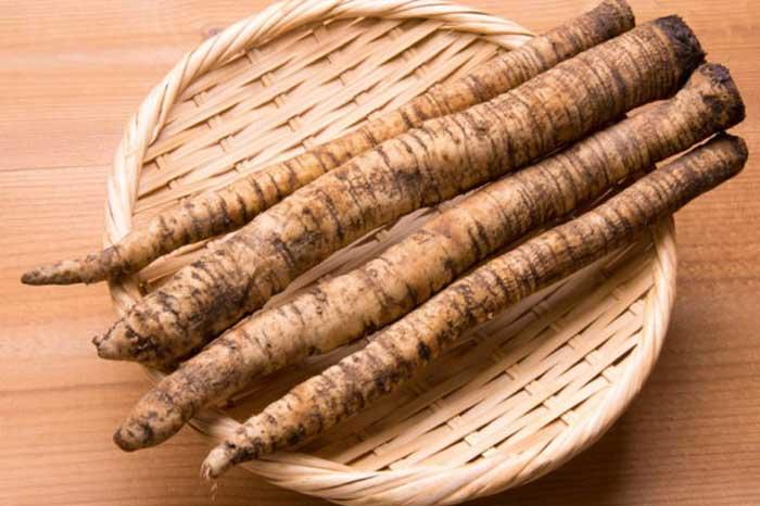 Чем полезен корень лопуха для организма