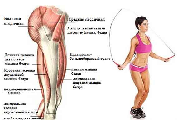 Какие мышцы задействованы при прыжках на скакалке
