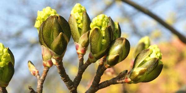 Какие травы можно собирать в марте, календарь сбора