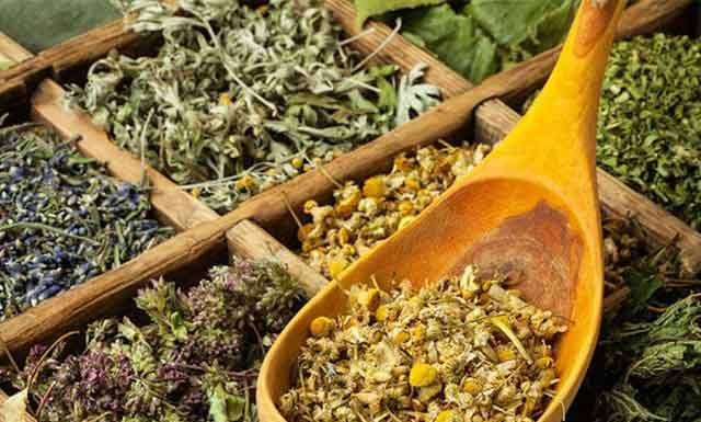 Календарь сбора трав и растений по месяцам
