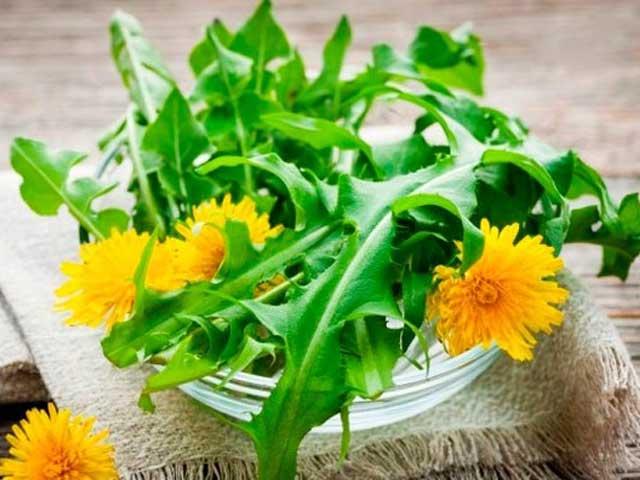 Польза и вред салата из одуванчиков: для похудения, как собирать