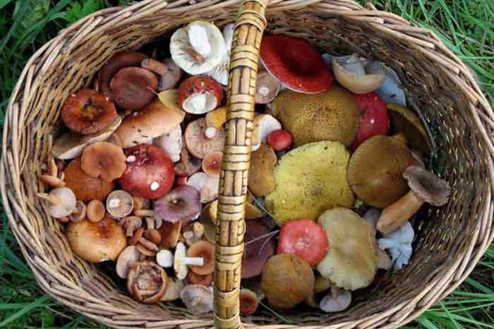 Таблица содержания углеводов в грибах