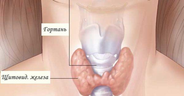 Народные средства от гипотиреоза щитовидной железы