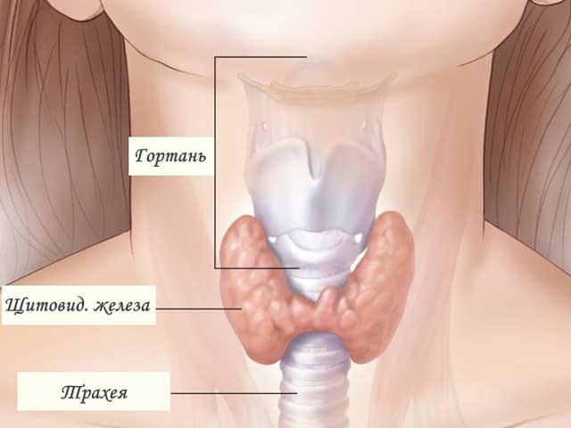 Лечение гипотиреоза народными средствами у женщин