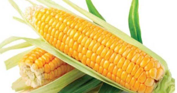Чем полезна кукуруза для организма человека