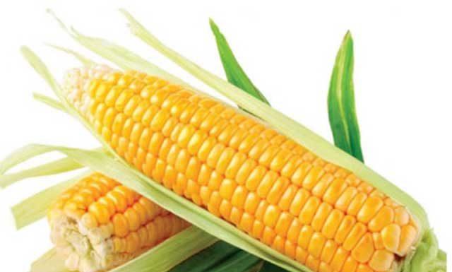 Польза и вред кукурузы для здоровья организма человека