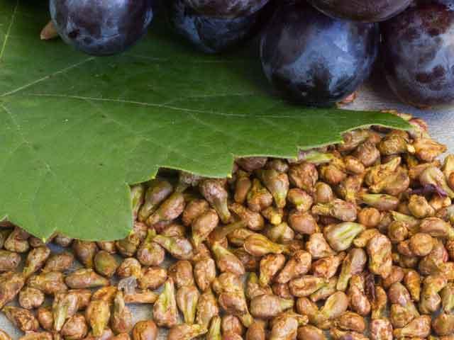 Польза и вред виноградных косточек для организма человека