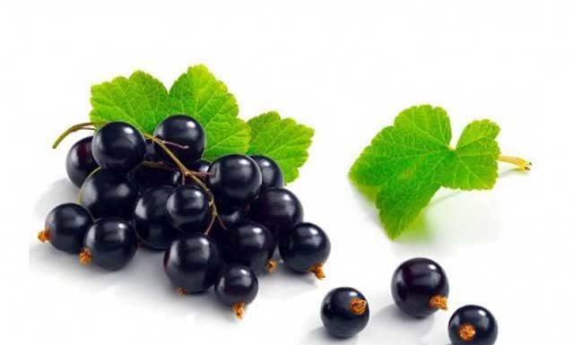 Черная смородина: польза и вред для здоровья