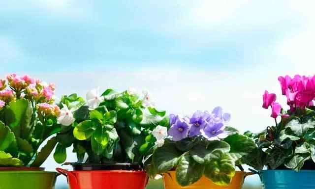 12 комнатных растений, которые должны быть в доме