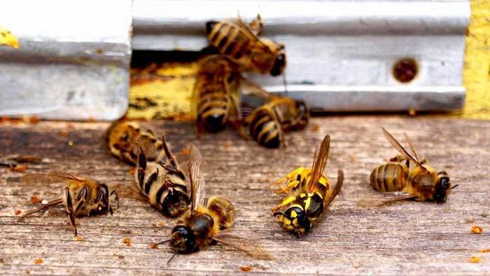Почему умирают пчелы по всему миру