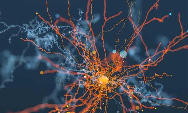 Как создать новые нейронные связи? Какие факторы способствуют нейрогенезу