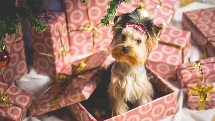 Почему нельзя дарить животных на новый год