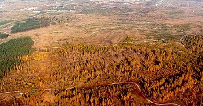Архивное фото Рыжего леса